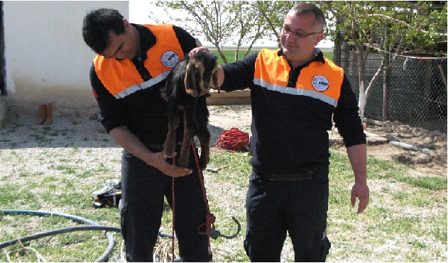 Aksaray AFAD'tan Güvenli Hayvan Kurtarma Eğitimi