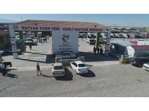 Aksaray'da hayvan park yeri ve canlı hayvan borsası arife gününe kadar açık