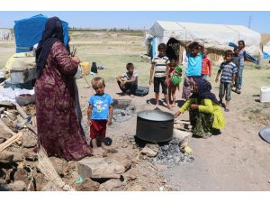 Çoluk çocuk tarlalarda çalışıp, çadırlarda yaşıyorlar