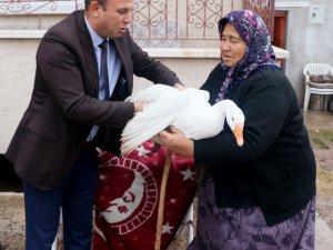 Hindileri çalınan Fadik Teyze'ye hayvan desteği