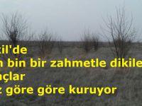 Eskil'de o alandaki ağaçlar göz göre göre kuruyor
