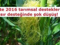 İşte 2016 tarımsal destekleri! Ayçiçeği desteği arttı, mısır düştü!