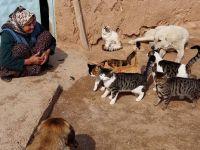 Eskil'in merhamet anası! 15 senedir sokak hayvanlarına analık yapıyor