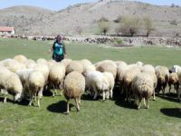4 Bin Lira Maaşla Çoban Bulunamıyor