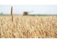 Gıda Üretiminin Sürdürülebilirliği İçin Köyden Kente Göç Önlenmeli