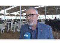 Aksaray'da 'Hayvan Oteli'ne Tüccarlardan Büyük İlgi