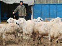 Yerli Çoban Sıkıntısı Afganlılara İstihdam Sağladı