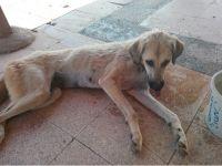 Aksaray'da kuyuya düşen köpek kurtarıldı