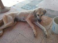 Kuyuda mahsur kalan köpek AFAD ekiplerince kurtarıldı