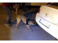 Narkotik köpeği 'Çakı' araçtaki gizli esrarı buldu