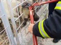 Demir korkuluklara başı sıkışan köpek kurtarıldı