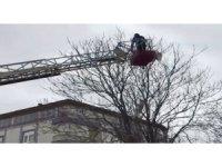 Ağaçta mahsur kalan güvercini itfaiye kurtardı