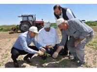 Aksaray'a süneyle mücadele çalışmaları başladı