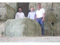 Aksaray'da yurt dışına yonca ihracatı başladı