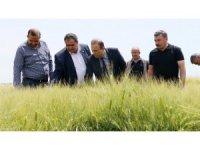 Aksaray'da süne üreticilerin korkulu rüyası oldu