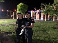 Ağaçta mahsur kalan kedi itfaiye ekiplerince kurtarıldı