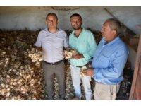 Aksaray'dan yurt dışına sarımsak ihracatı yapılacak