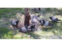 Sıcaktan bunalan güvercinlerin suda serinleme keyfi