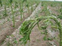 Aksaray'da tarım arazilerini dolu ve sel vurdu
