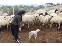 Kadın çiftçi hibe desteği ile başladı, şimdi çiftlik kurdu