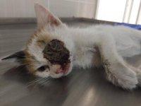 Yavru kedi hem ağaçtan kurtarıldı hem de tümörden