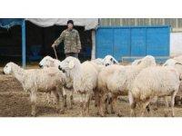 Aksaray'da çobanlara 2 milyon TL destek ödemesi yapılacak