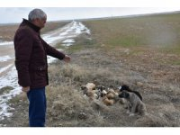 Aksaray'da yavru köpekler soğukta ölüme terk edildi