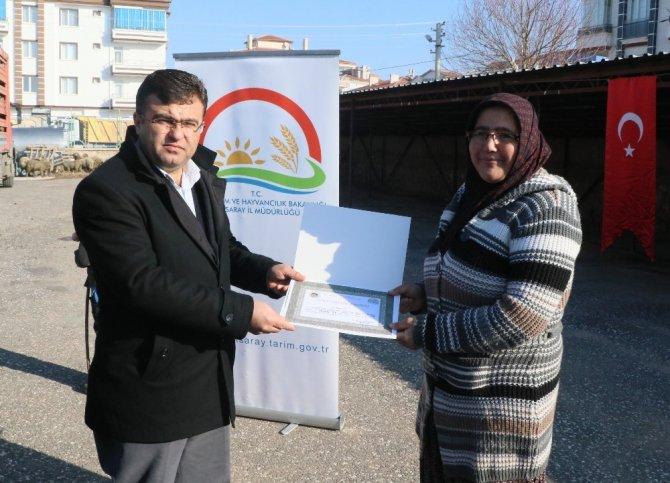 Aksaray'da 6 Üreticiye 222 Küçükbaş Hayvan Dağıtıldı