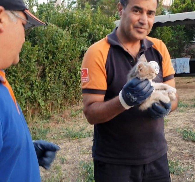 Kuyuda mahsur kalan kedi AFAD ekiplerince kurtarıldı