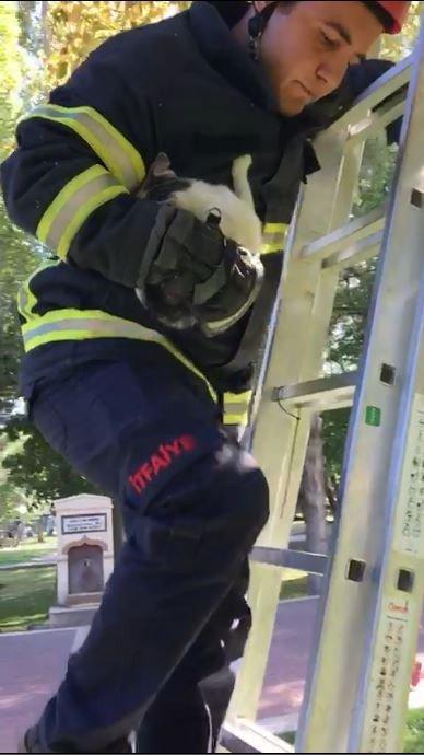 Ağaçta mahsur kalan kedi itfaiye tarafından kurtarıldı