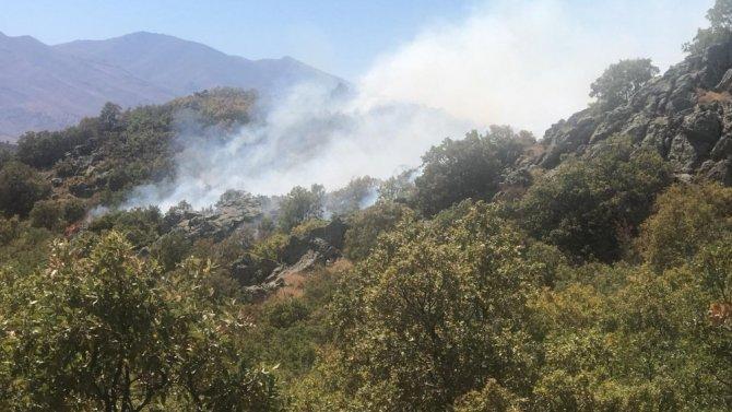 Aksaray'da orman yangını