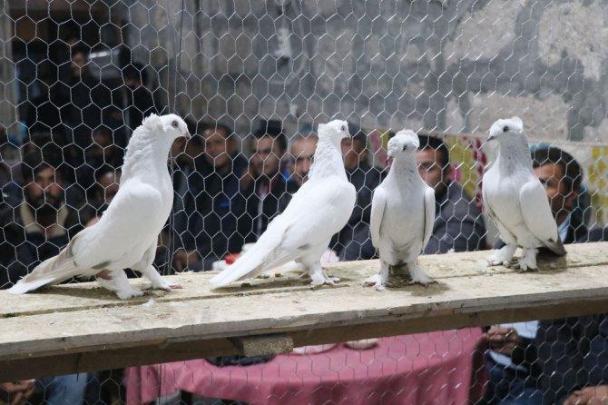 Araba değerindeki güvercinler ihaleyle alıcı buluyor