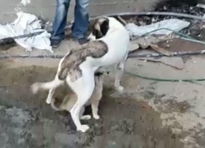 Yavru köpek mahsur kaldığı yerden kurtarılınca annesini emmeye başladı
