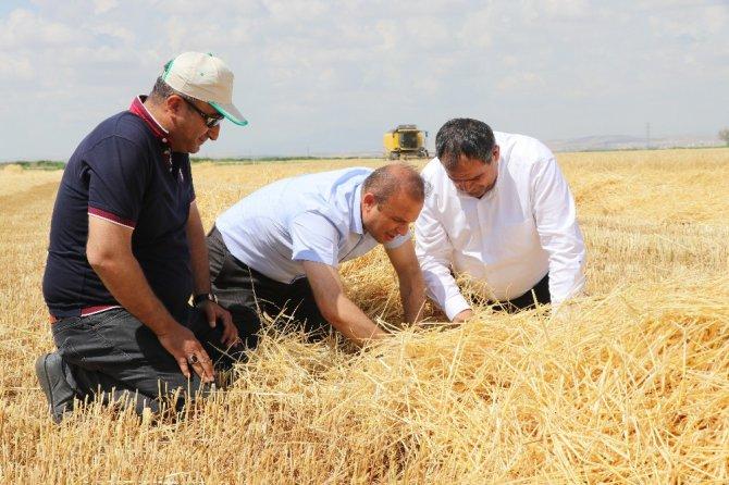 Arpa üretiminde Türkiye 6'ncısı Aksaray'da hasat başladı
