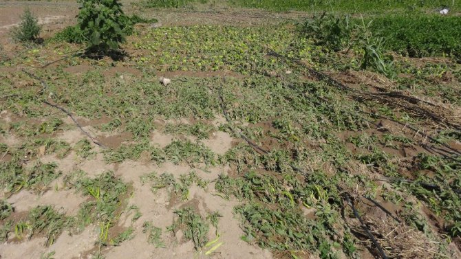 Aksaray'da 200 bin dekar arazide 30 milyonluk dolu ve sel zararı