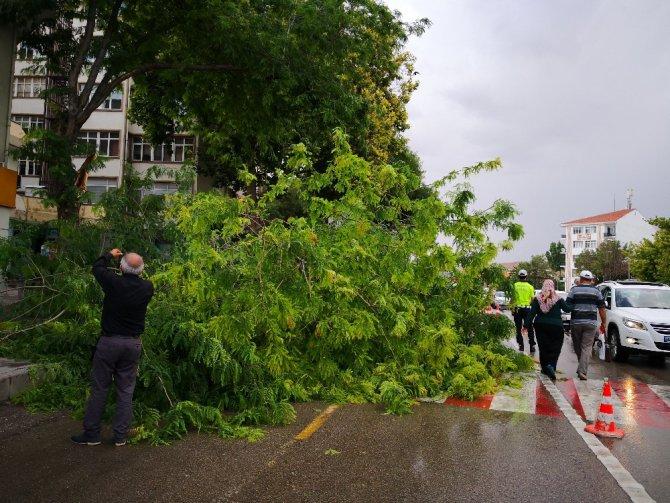 Aksaray'da ağaç devrildi: 2 yaralı