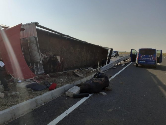 Aksaray'da hayvan yüklü tır devrildi: 2 yaralı