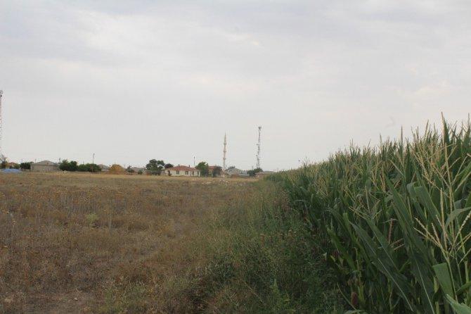 Konya'da mısır tarlasında korkutan obruk
