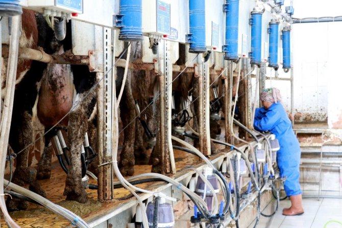 Aksaray'da üreticiler eğitiliyor; verim, kalite ve hijyen artıyor