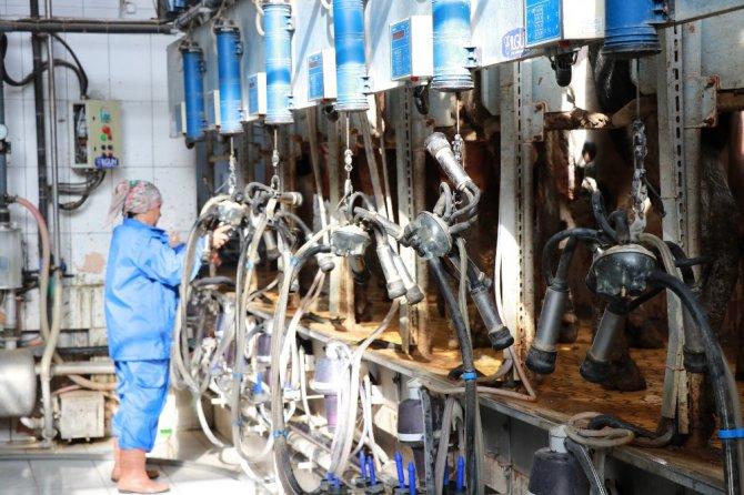 Üreticilerin sütleri değerini bulacak