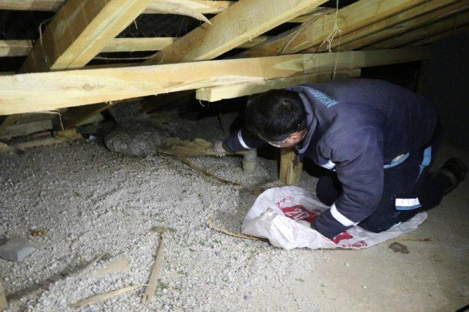 Aksaray'da apartmanın çatısında yaban arısı yuvası bulundu