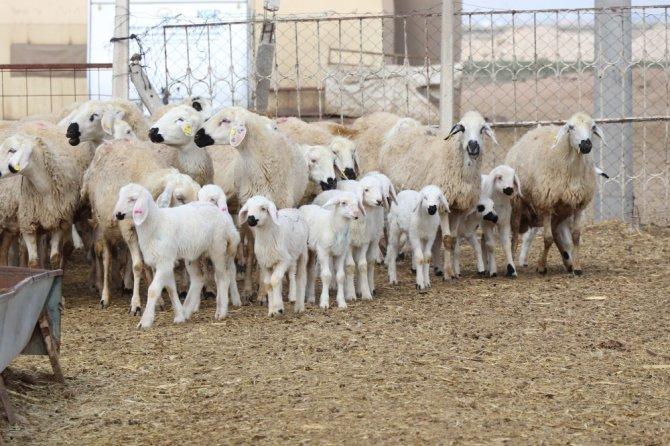 """Hayvan üreticileri: """"Paramızı kaybedelim, insanlarımızı kaybetmeyelim"""""""