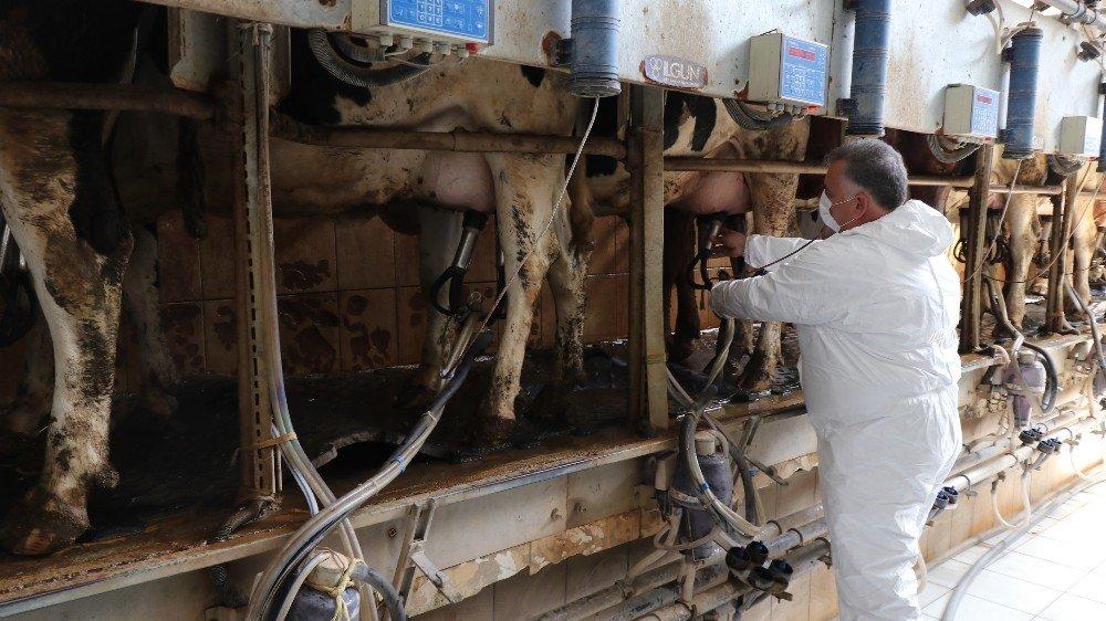 Korona virüs süt üreticisinin hızını kesemedi