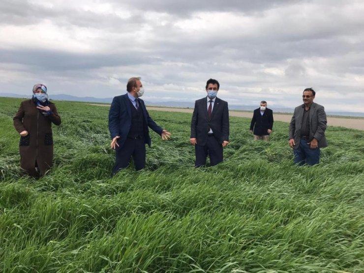 Yem bitkisi Sütotu Elif Aksaray'da tuttu