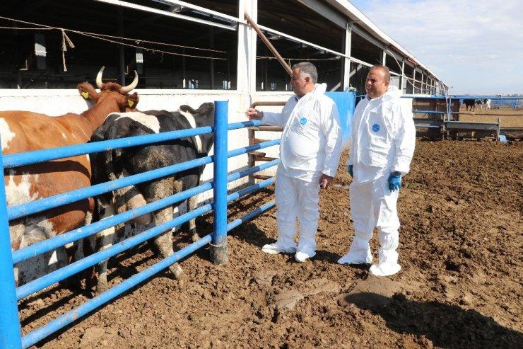 Aksaray ilave çiğ süt desteklemesinde pilot il olarak seçildi