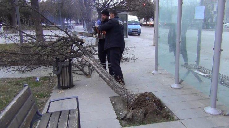 Kırıkkale'de kuvvetli rüzgar ağaçları yerinden söktü, 1 işyeri zarar gördü