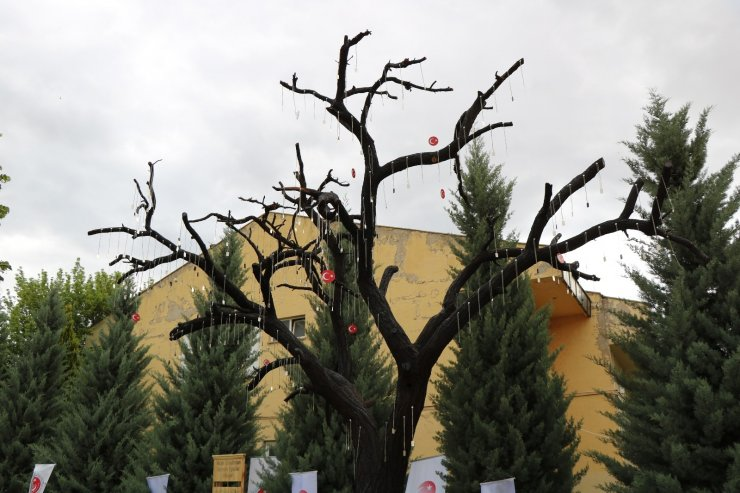 Kırşehir'de Şehitler Ağacı açıldı