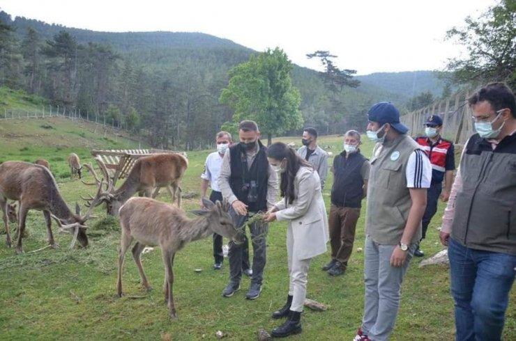 Alpu'dan Kızıl Geyik Üretim İstasyonuna ziyaret