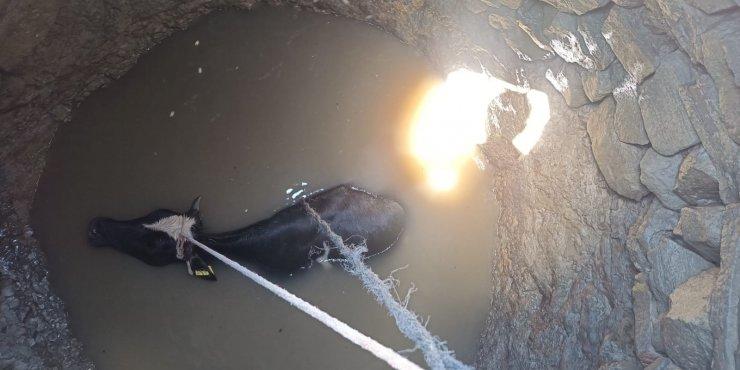 Başkent'te kuyuya düşen ineği itfaiye kurtardı