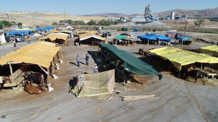 Hayvan pazarı yer tahsisleri başvuruları başlıyor